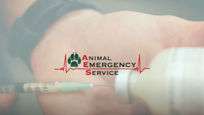 Animal Emergency Service - first video produced